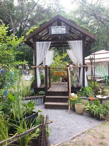 Golden pond water plants tropical backyard retreat